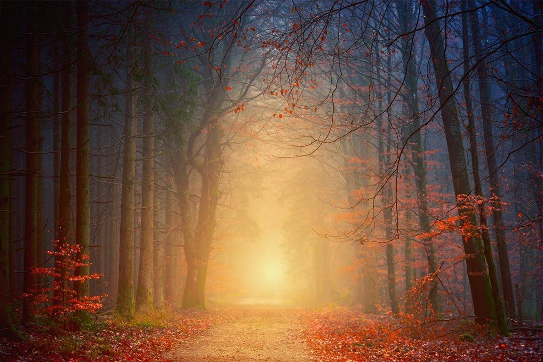 Tajemnice we mgle